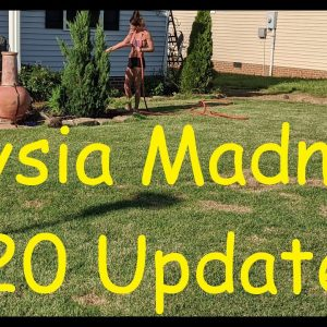Zoysia Madness 2020 Sprummer Update!  Front yard complete?  End of Zoysia Madness (maybe)?