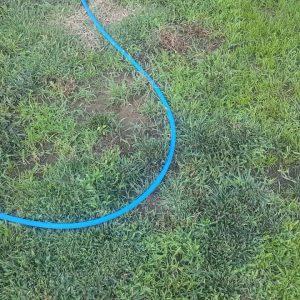 Zenith Zoysia Grass Project 12 Month Status