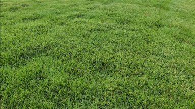 Zoysia Vs. Bermuda Grass! Season 3 Episode 3